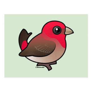 Cute Common Rosefinch Postcard