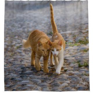 Cute Companioned Kittens Walk Same Path Photo Tub
