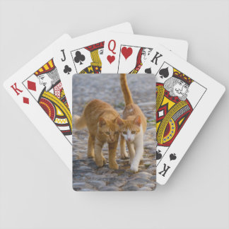 Cute Companioned Kittens Walk the Same Path Photo Playing Cards