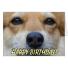 Cute corgi birthday card