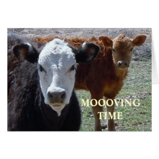 Cute Cows - Western Change of Address Card
