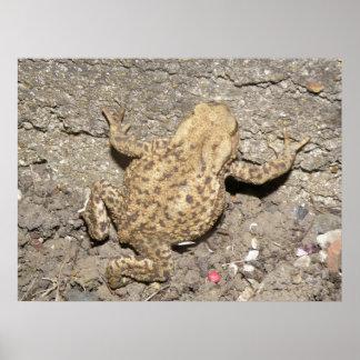 Cute Crawling Toad Print