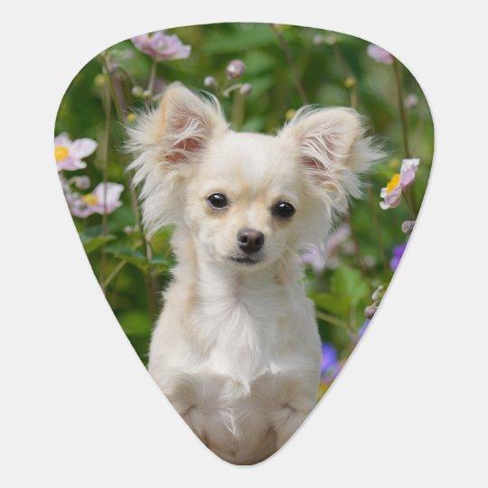 Cute cream Chihuahua Dog Puppy Photo - Plectrum Guitar Pick