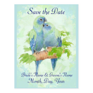 Cute Cuddling Tropical Parrot Bird Wedding Couple Postcard