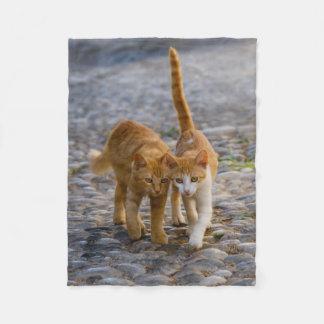 Cute Cuddly Cat Kittens Friends Stony Path Photo - Fleece Blanket