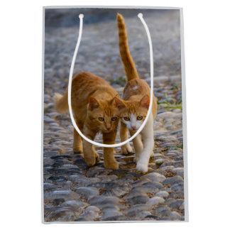 Cute Cuddly Cats Kittens Friends Stony Path Photo Medium Gift Bag