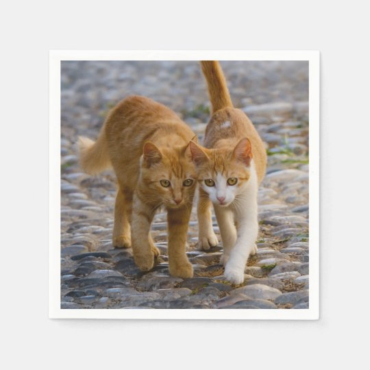 Cute Cuddly Cats Kittens Friends Stony Path Photo Paper Napkins