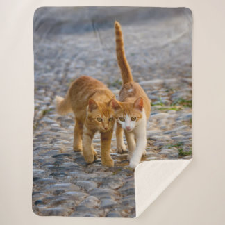 Cute Cuddly Cats Kittens Friends Stony Path Photo Sherpa Blanket