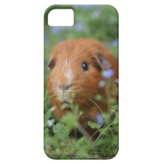 Cute cuddly ginger guinea pig outside on grass case for the iPhone 5