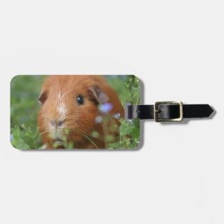 Cute cuddly ginger guinea pig outside on grass luggage tag