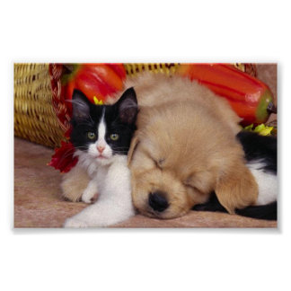 Cute cuddly pets poster