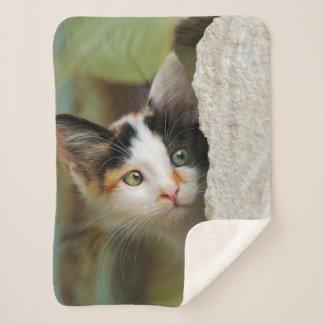 Cute Curious Cat Kitten Prying Eyes Head Photo Pet Sherpa Blanket