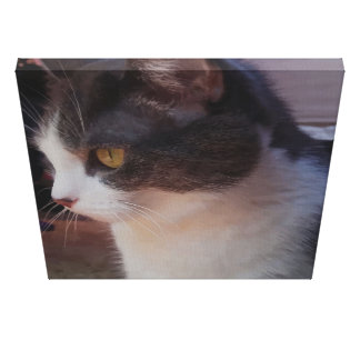 Cute Curious Cat Picture Wrapped Canvas