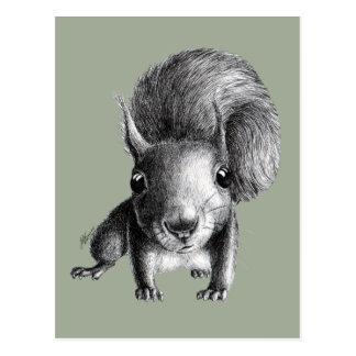 Cute Curious Squirrel Postcard