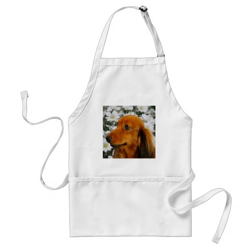 Cute Dachshund (Brown Long Haired) in Flowers Apron