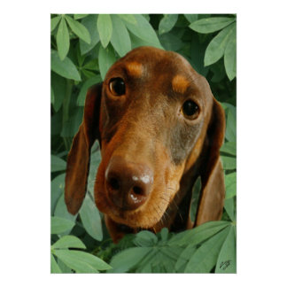 Cute Dachshund (Brown Short Haired) Green Leaves Poster