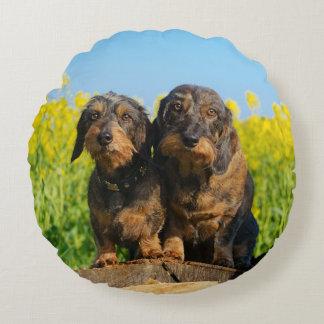 Cute Dachshund Dogs Dackel Portrait Photo - smooth Round Pillow