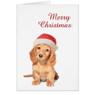 Cute Dachshund pup with Santa hat Merry Christmas Card