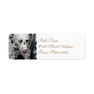 Cute Dalmatian Address Labels