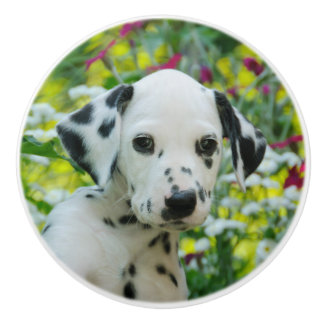 Cute Dalmatian Dog Cute Puppy Portrait, Decorative Ceramic Knob