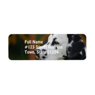 Cute Dalmatian Puppy Return Address Label