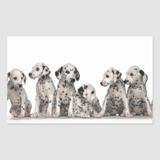 cute dalmation puppies pupy pup pups dog dogs sticker