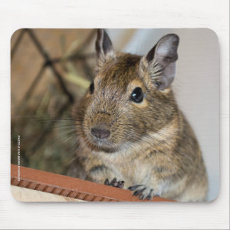 Cute Degu Mouse Pad