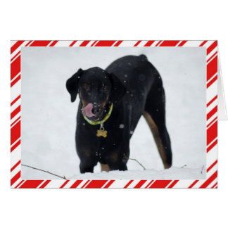 Cute Doberman in Snow Holiday card