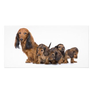 Cute dog and puppies photo card