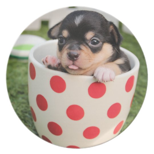 Cute Dog in mug Plate