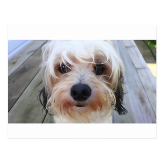 Cute Dog on Bench Postcard