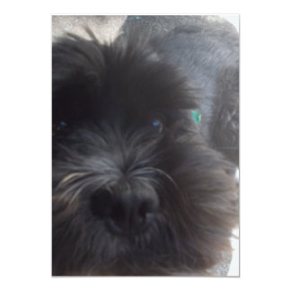 cute dog postcards (cocker spaniel)