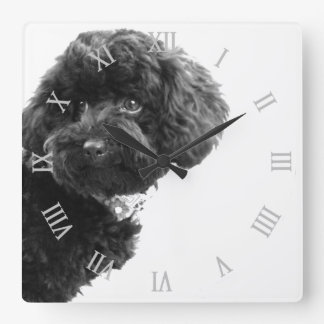 Cute Dog Puppy Black and White/Photography Square Wall Clock