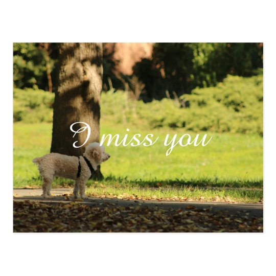cute dog waiting for owner missing you postcard