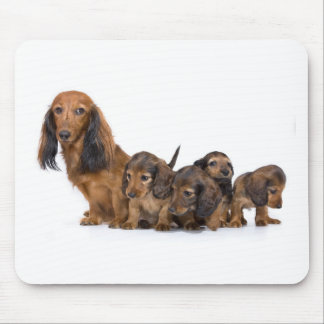 Cute dog with puppies mouse pad