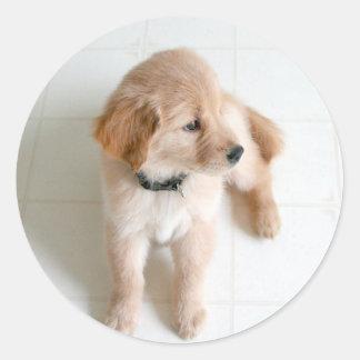 Cute Doggy Classic Round Sticker