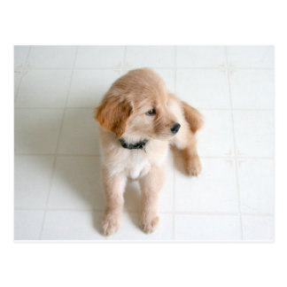 Cute Doggy Postcard