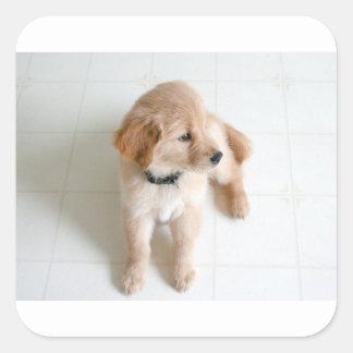 Cute Doggy Square Sticker