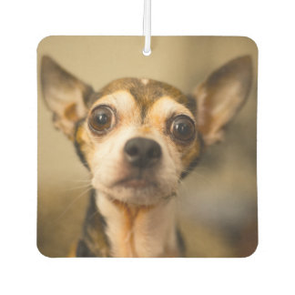 Cute Dogs car air freshner Air Freshener