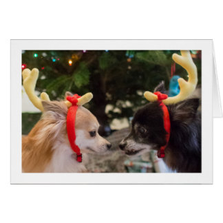 Cute Dogs Dressed as Christmas Reindeer Card