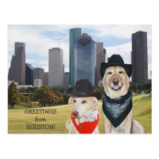 Cute Dogs/Lab Greetings from Houston Postcard