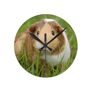 Cute Domestic Guinea Pig Clock