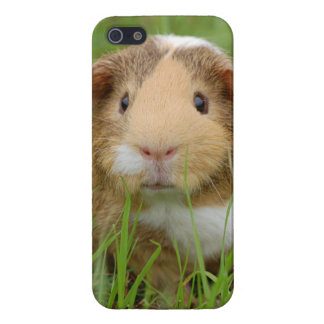 Cute Domestic Guinea Pig Cover For iPhone 5/5S