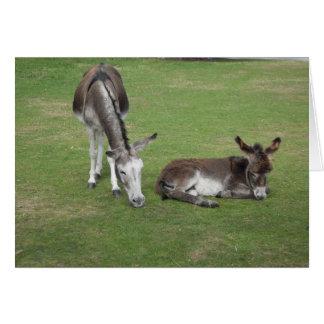 Cute donkey grazing with sleeping foal card