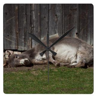 Cute Donkey Resting After A Sand Bath Wallclock