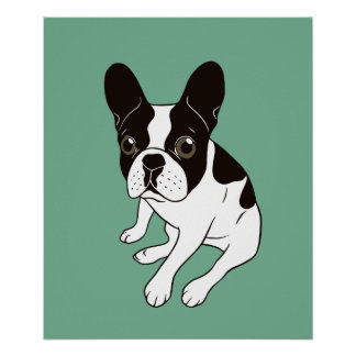 Cute double hooded pied Frenchie is chilling Poster