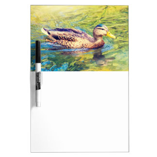 Cute Duck Swimming Dry Erase Board