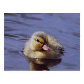 cute duckling postcard