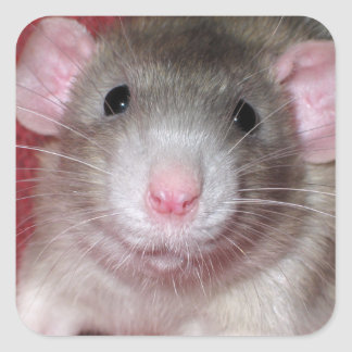 Cute Dumbo Rat Square Sticker