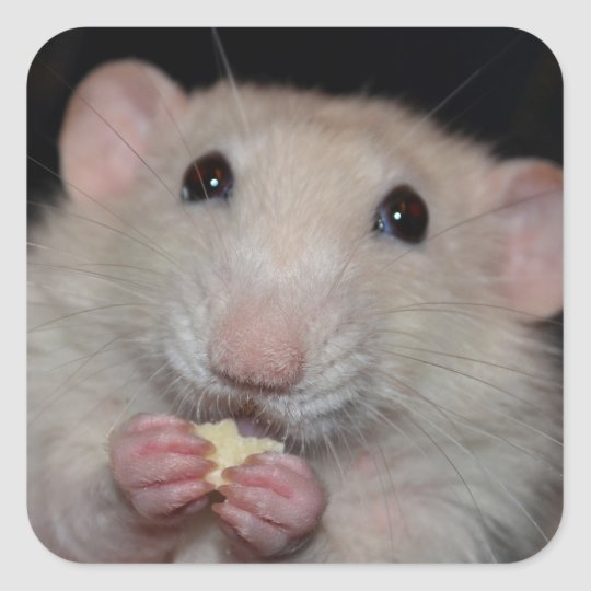 Cute Dumbo Rat Stickers